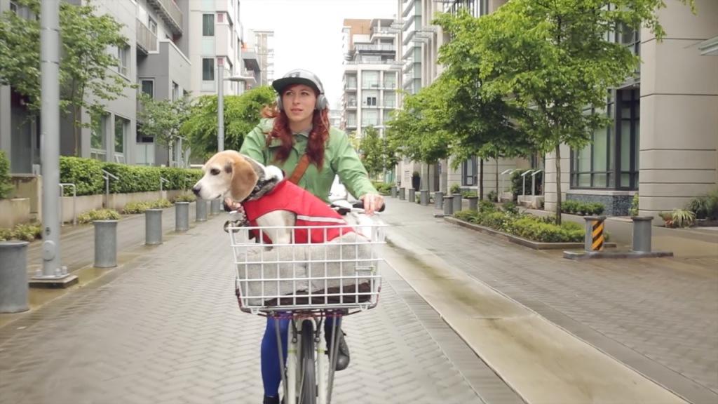Companionship-dog-front